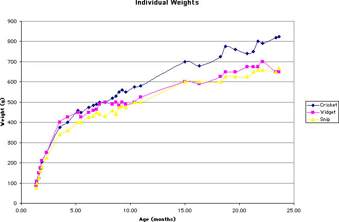 At Picture Of A Weight Chart For A Male | Male Models Picture